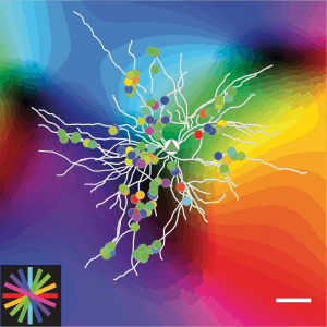 New insights into neural computations in cerebral cortex