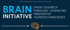 NIH Awards $1.4 Million to MPFI and NYU Scientists supporting NIH BRAIN Initiative