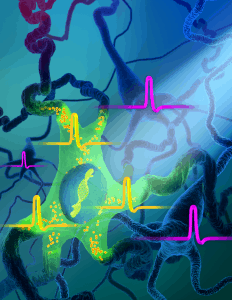 New tool to identify and control neurons